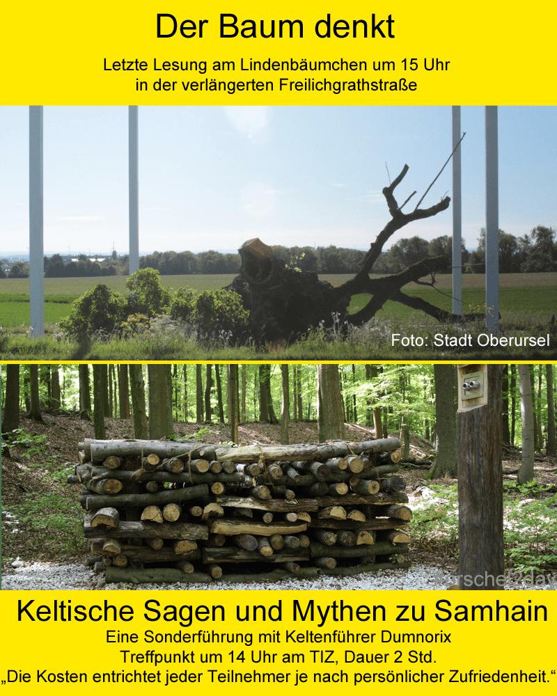 Der Baum denkt / Keltische Sagen und Mythen zu Samhain