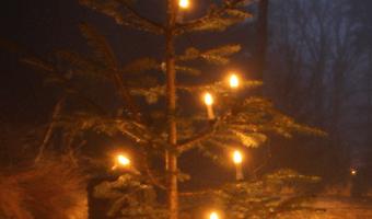 Waldweihnacht im Schulwald